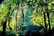 Renforcement des mécanismes de gestion durable des forêts!