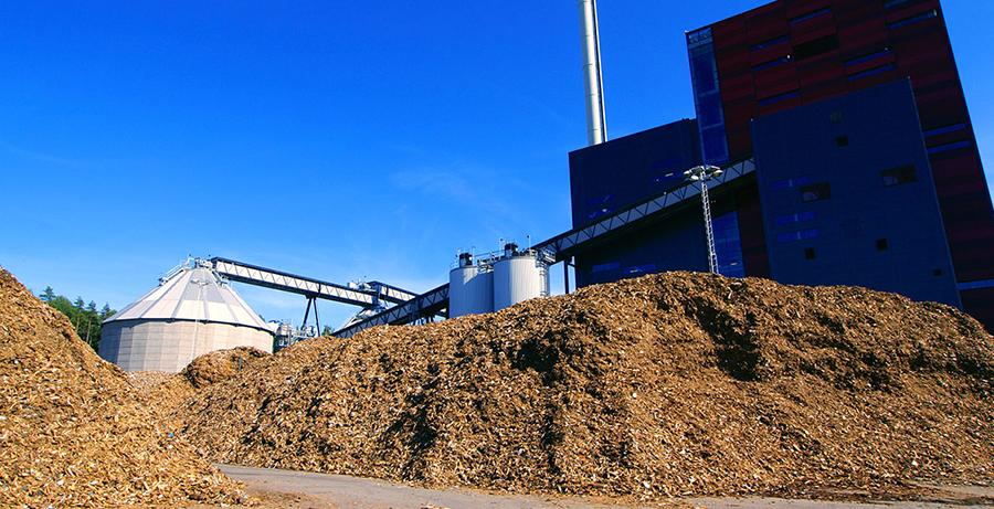 Biomasse: Troncs, branches et feuilles!