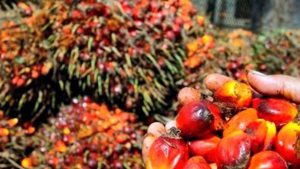 Huile de palme: Un nouveau carburant économique!