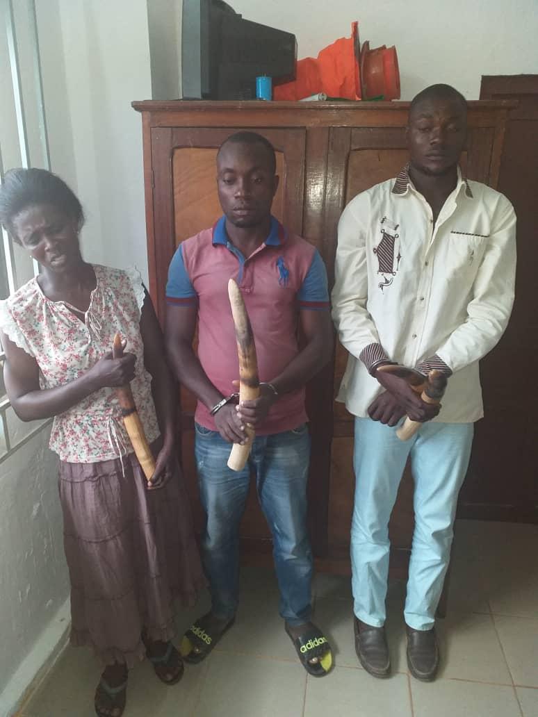 MOUILA: Trois trafiquants d'ivoire interpellés !