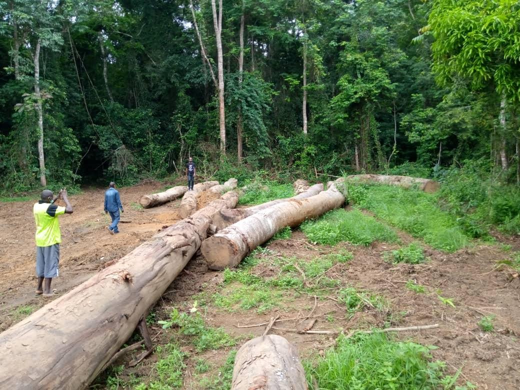 NGOUNIE/ EXPLOITATION FORESTIÈRE : Fougamou objet des illégalités et des tensions !