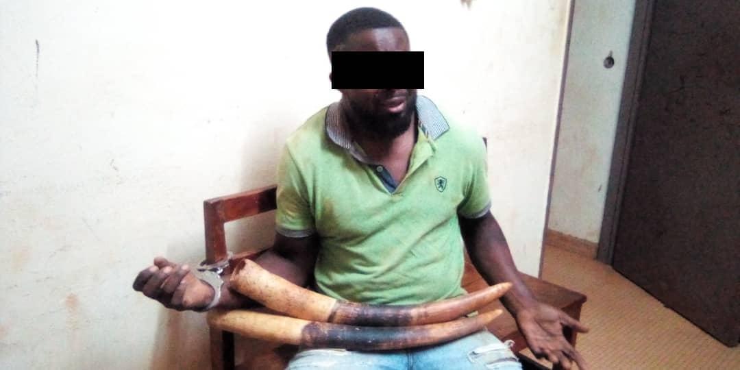 Moabi / TRAFIC D'IVOIRE / Un présumé trafiquant arrêté !