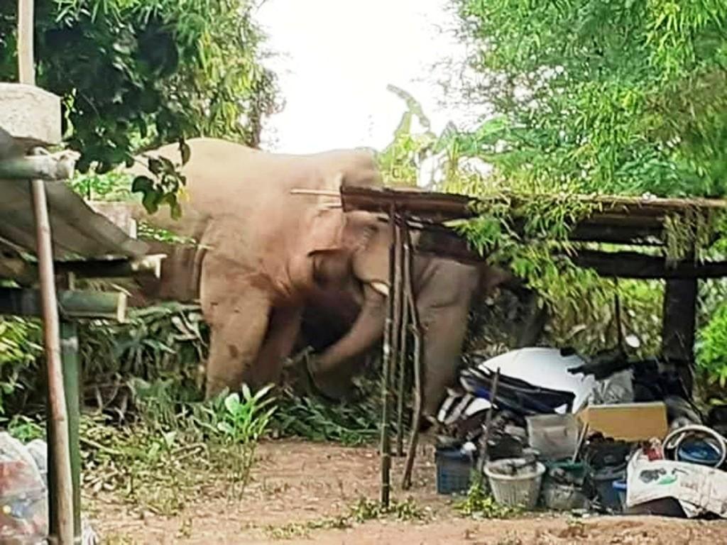 Conflits homme – éléphant : la population de Mekambo entend se faire justice