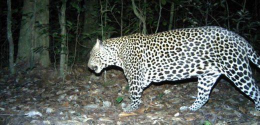 Ministère des eaux et forêts : «Améliorer la protection de la faune grâce à l'intelligence artificielle»