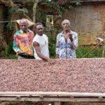 Olam Gabon au secours des petits agriculteurs et des coopératives dans le Woleu-Ntem