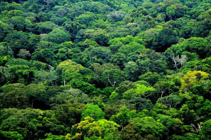 Environnement : le Gabon s'enrichit d'un texte de loi pour lutter contre le réchauffement climatique