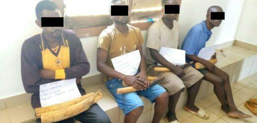 Trafic d'ivoire : 4 présumés trafiquants interpellés à Kango